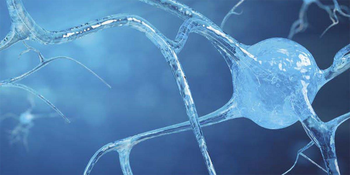 La scoperta dei neuroni specchio: atto motorio e gesto motorio